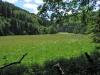 Dambachtal