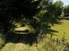 Wiesenpfad