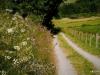 Wiesenblumen säumen die Wege