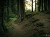 Waldpfad zurück nach Grönebach