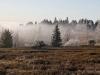 Nebelschwaden ziehen über die Astenheide