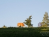 Rothaarsteig in Jagdhaus