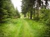 Rotmilan-Höhenweg in Petersgrund