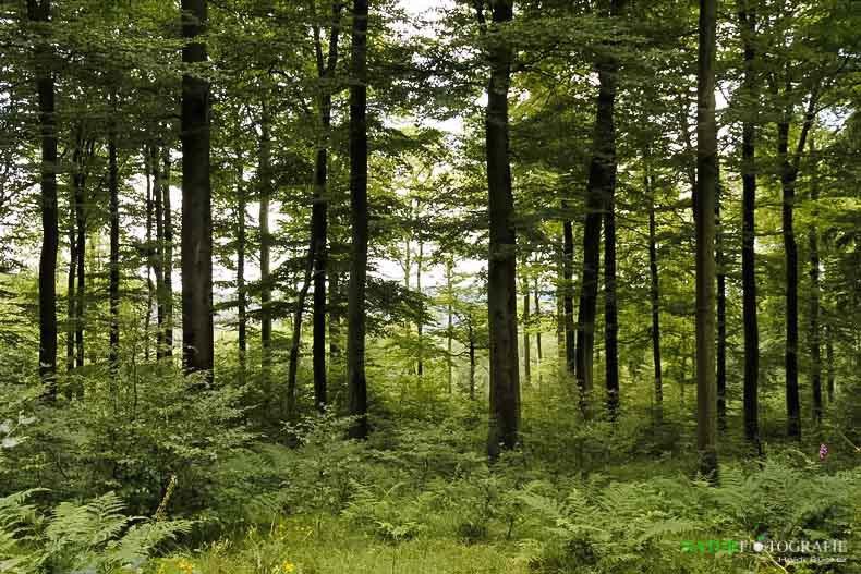Naturwaldzelle