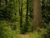 Naturpfad