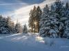 Girkhausen_Steinert_Winter-012