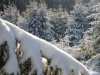 Girkhausen_Steinert_Winter-021