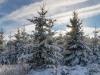 Girkhausen_Steinert_Winter-022