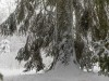Girkhausen_Steinert_Winter-036