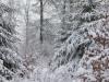Girkhausen_Steinert_Winter-042