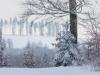 Girkhausen_Steinert_Winter-048