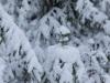 Girkhausen_Steinert_Winter-050