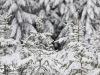 Girkhausen_Steinert_Winter-052