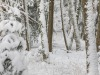 Girkhausen_Steinert_Winter-057