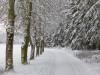 Girkhausen_Steinert_Winter-073