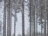 Girkhausen_Steinert_Winter-075