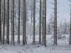 Girkhausen_Steinert_Winter-076