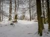 Winter-im-Schmallenberger-Sauerland-031