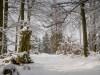 Winter-im-Schmallenberger-Sauerland-032