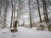 Winter-im-Schmallenberger-Sauerland-033