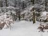 Winter-im-Schmallenberger-Sauerland-034