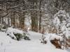 Winter-im-Schmallenberger-Sauerland-039