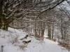 Winter-im-Schmallenberger-Sauerland-040