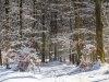 Winter-im-Schmallenberger-Sauerland-046