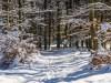Winter-im-Schmallenberger-Sauerland-048