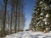 Winter-im-Schmallenberger-Sauerland-050